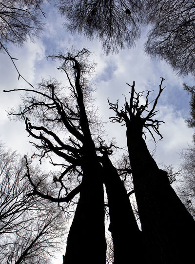 Low angle view of silhouette tree in forest against sky