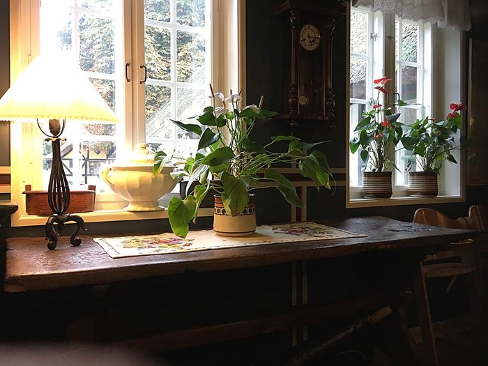 Denmark 🇩🇰🇩🇰🇩🇰 Indoors  Table Window Glass - Material Plant Glass Vase Flower Dining Table Arrangement Houseplant Day Place Setting Interiors Modern Freshness Old House On The Road Architectural Detail Food And Drink Danish Inn Fine Art Photography Old Historical Building Place For Resistance People World War 2