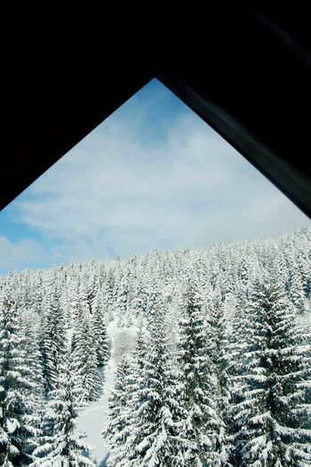 No People Nature Wintertime Snow Winterwonderland View Sky Framed Woods Trees Blue Winter January Mountain Igman Bosnia And Herzegovina