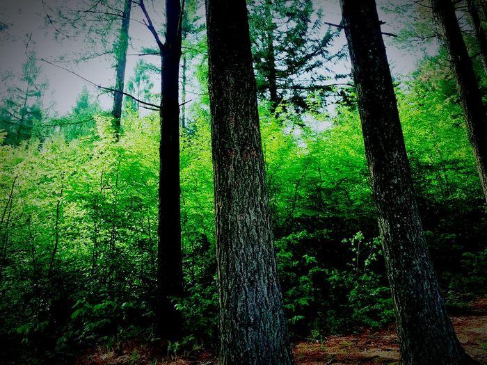 Deep Woods Dark Woods Little Red Riding Hood Bestshot Best  Exploring Nature Exploring Enjoying Life Bestoftheday