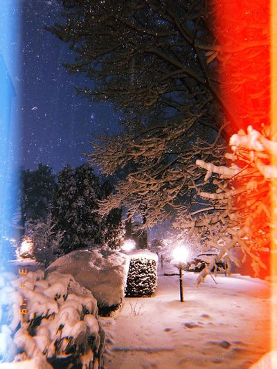 Peaceful Scenics - Nature Scenics Connecticut New England  Snowflake Night Nature Illuminated Sky Tree Outdoors Cold Temperature Lens Flare Snowing Winter Snow Beauty In Nature No People