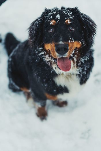 Doggie Dog Canine One Animal Pets Domestic Animals Animal Themes Domestic Animal Snow Mammal Winter Cold Temperature No People Focus On Foreground Portrait Day
