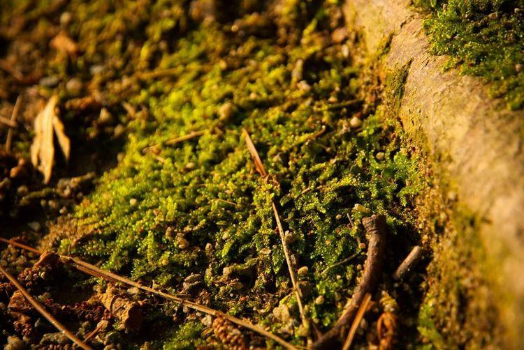 Life Is Journey Traveling In Fukuoka Ladyphotographerofthemonth Fukuoka City  Forever Alone Macro_collection Macro Nature Macroporn Macrogardener Plantography