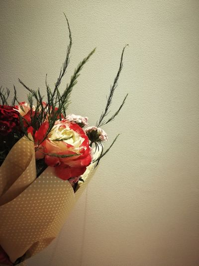 Close-up of red flower on wall