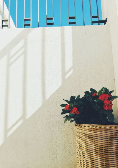 Low angle view of potted plants against white wall
