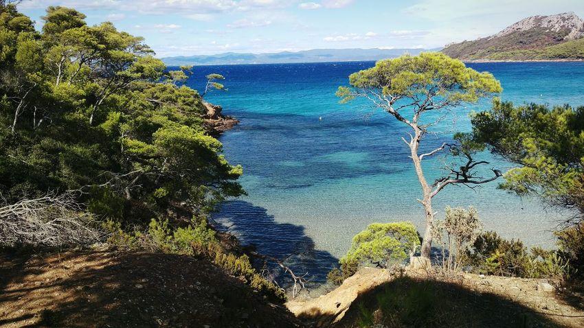 Sea Beauty In Nature Idyllic Tree Taking A Trip Looking Around Enjoying Life Porquerolles