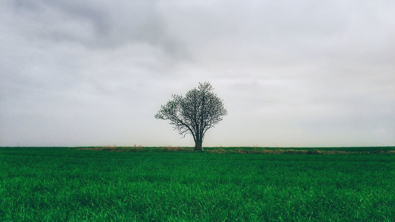 lone, landscape, isolated, tree, solitude, field, nature, grass, horizon over land, tranquility, tranquil scene, beauty in nature, sky, branch, no people, day, outdoors