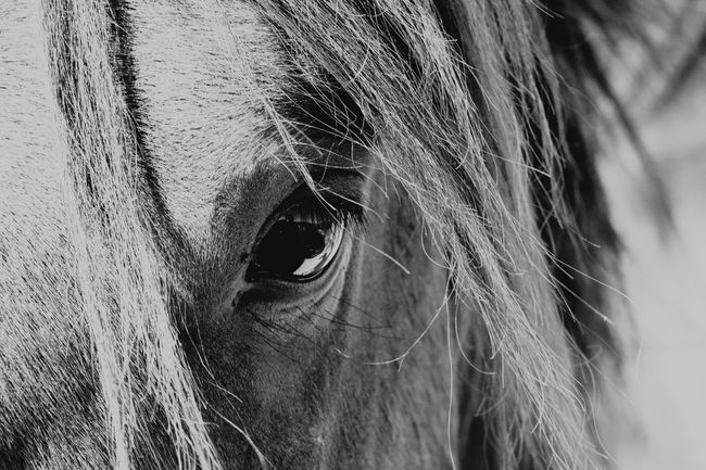 Close-up Horse Photography  Outdoors Horse Head