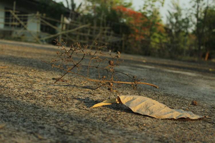 Close-up of dry leaves on road during autumn