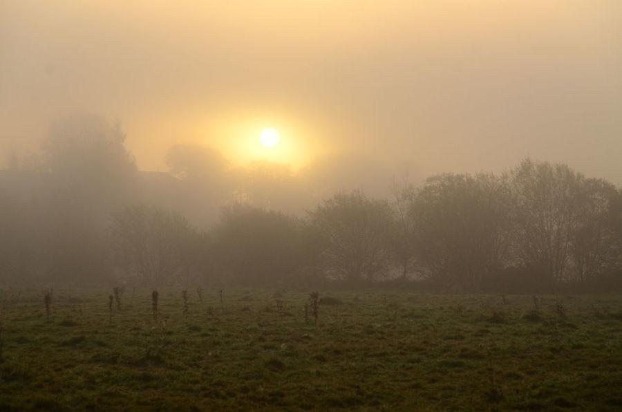 Trees Fog Grass Misty Sunrise Outdoors Rural Scene Sun Tranquility