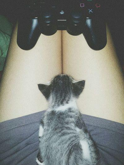 Meu Oreon e eu jogando, mais ele cansou e está tirando um cochilo rapidinho rsrs' Cat Lovers Cute Pets Girls And Games @biamedeirosz I Love My Cat Mycats PS3 😍 Game Cats The Cat Oreon