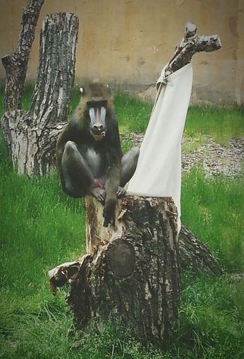 Animals Portrait Monkey Zoo EyeEm