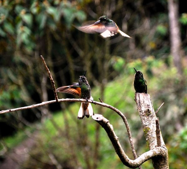 Hanging Out EyeEm Nature Lover Mountainscape Animal Photography Nature Photography Eyeemphotography Hummingbird Hummingbirdphotography Colombia