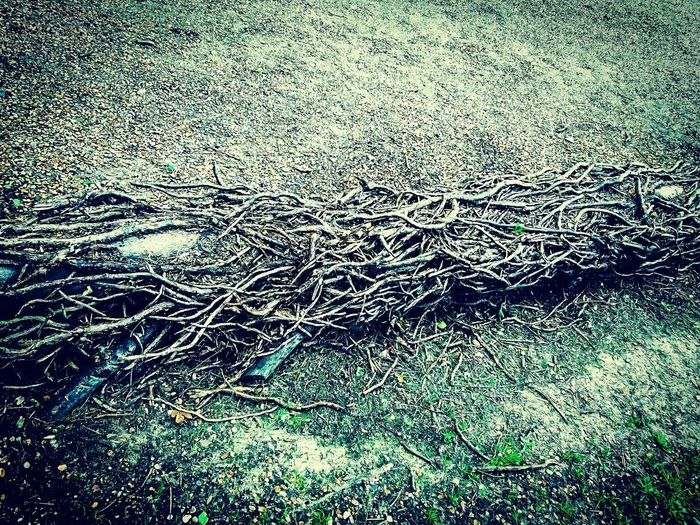 Tree trunk engulfed roots Tree Trunk Trunk Naturesbizarre Taking Photos Check This Out Naturelover Nature Photography Nature Me, My Camera And I Capture The Moment Outdoors Mobilephotography PhonePhotography Naturelovers Naturesbeauty Beauty In Nature Nature_collection