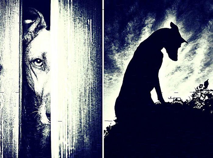 La soledad a veces es lo único que nos mantiene vivos aún... Dogslife Perros❤ SoledadCanina:( CienAñosDeSoledad