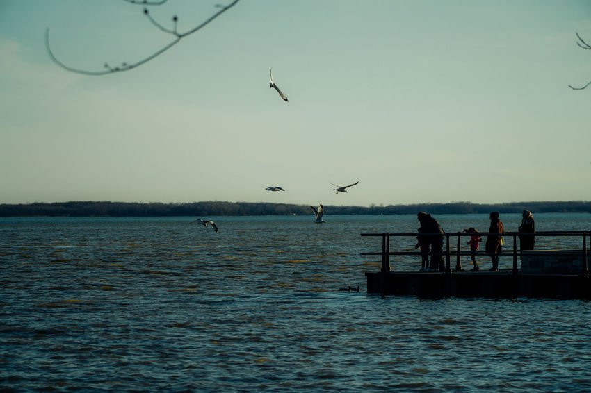 Lachine 18-105mm Lachine Nature Sony A6300 Tourist Attraction  Tranquility Animals In The Wild Beauty In Nature Bird Day Flock Of Birds Flying Large Group Of Animals Leisure Activity Lifestyles Men Mid-air Nature Outdoors Park People Real People Scenics Sea Silhouette Sky Spread Wings Sunset Togetherness Tourist Destination Tranquil Scene Tranquility Waling Around Water