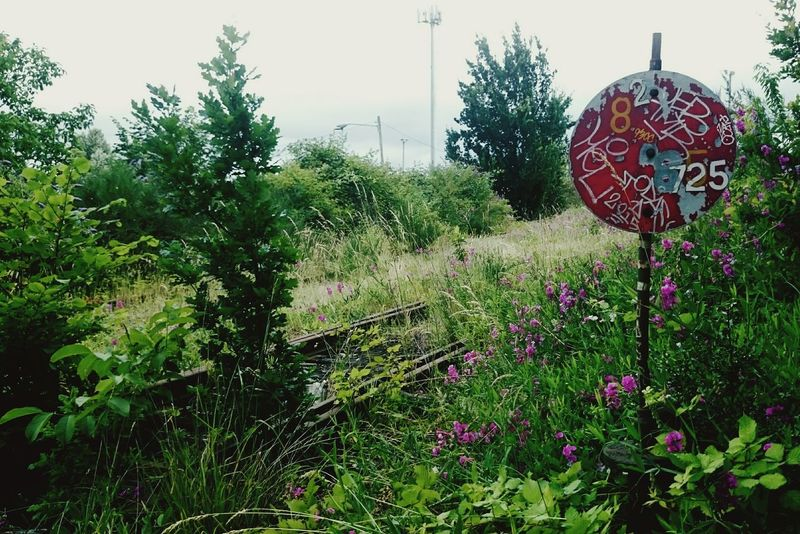 Abandoned Places Railroad Track Abandoned Railway Abandoned Rails Nature Taking Over Nature Takes It Back Nature Taking Over Again Green Portland Portland Oregon North Portland Rail Sign Decaying Overgrown Secret Places