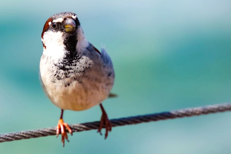 Close-up of bird perching on metal