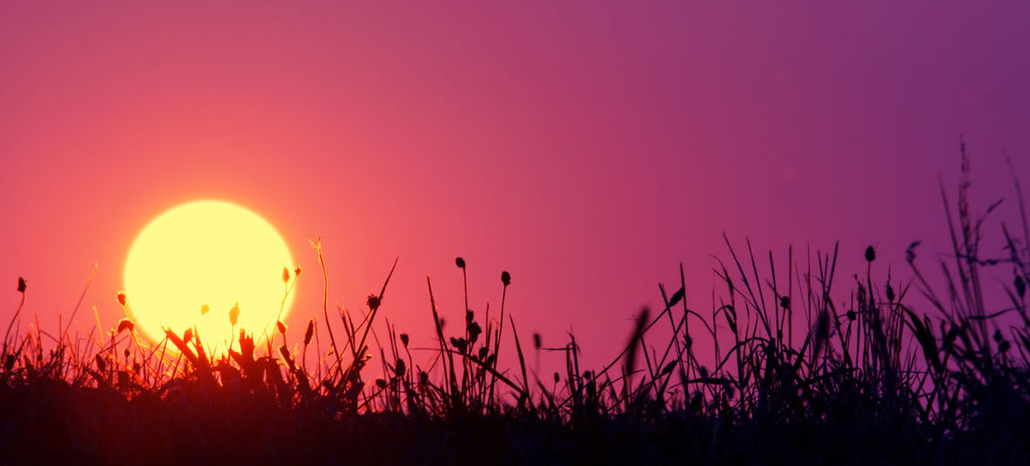 Silhouette plants growing on field against sky during sunset