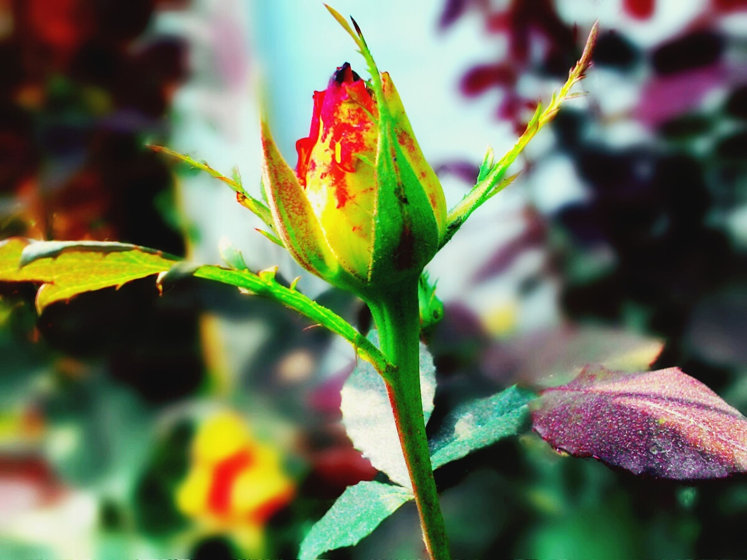 growth, leaf, close-up, freshness, focus on foreground, plant, flower, fragility, beauty in nature, nature, stem, bud, petal, flower head, selective focus, green color, red, outdoors, day, growing