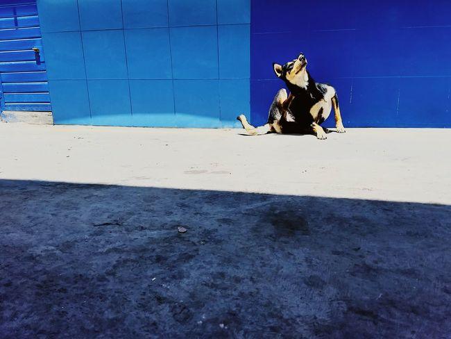狗 Vscox Dog Domestic Animals Blue Sunny One Animal Day