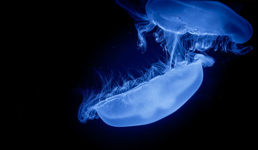 Jellyfish Jelly Fish Blue Motion Underwater Beauty In Nature No People Swimming Dreamlike Water Majestic Splashing UnderSea Tranquility Nature Vibrant Color Fujifilm Fujifilm X-E2 Karlsruhe