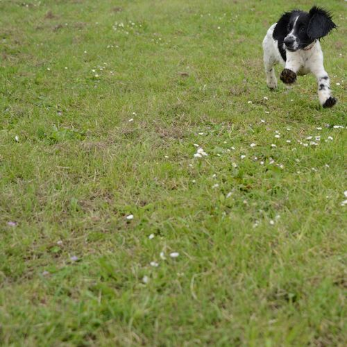 View of a dog running on field