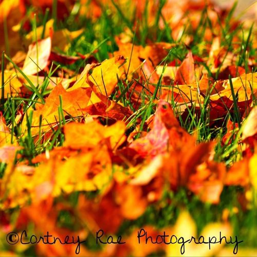 The leaves are all falling, and they're falling like they're falling in love with the ground. Andrea Gibson Fall Leaves Cortney Rae Photography Autumn
