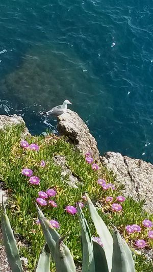 Flower Nature Plant Sea Water Beauty In Nature Outdoors Growth No People Green Color Day Freshness Close-up Fragility Limpidity Pure Beauty Beauty In Nature Travelinitaly Ligurian Coast. Liguriansea Portofino Italy Portofino Airing Purenature Seagull Serenity