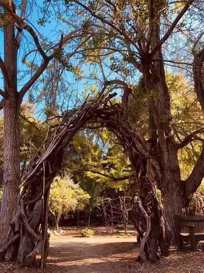 Gate in forest Garden Dark Forest Door In Woods Doortonowhere Doortoheaven Doortohell Door Wooden Gate Tree Plant Nature Day Sunlight Architecture Park
