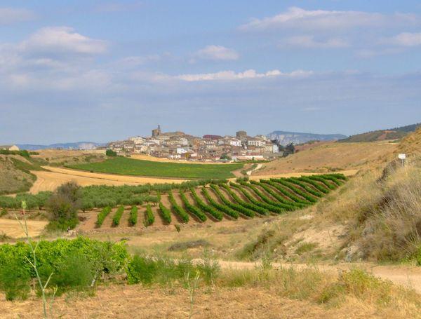 SPAIN Vineyard Agriculture No People Landscape Day Nature Sky Built Structure Travel Destinations