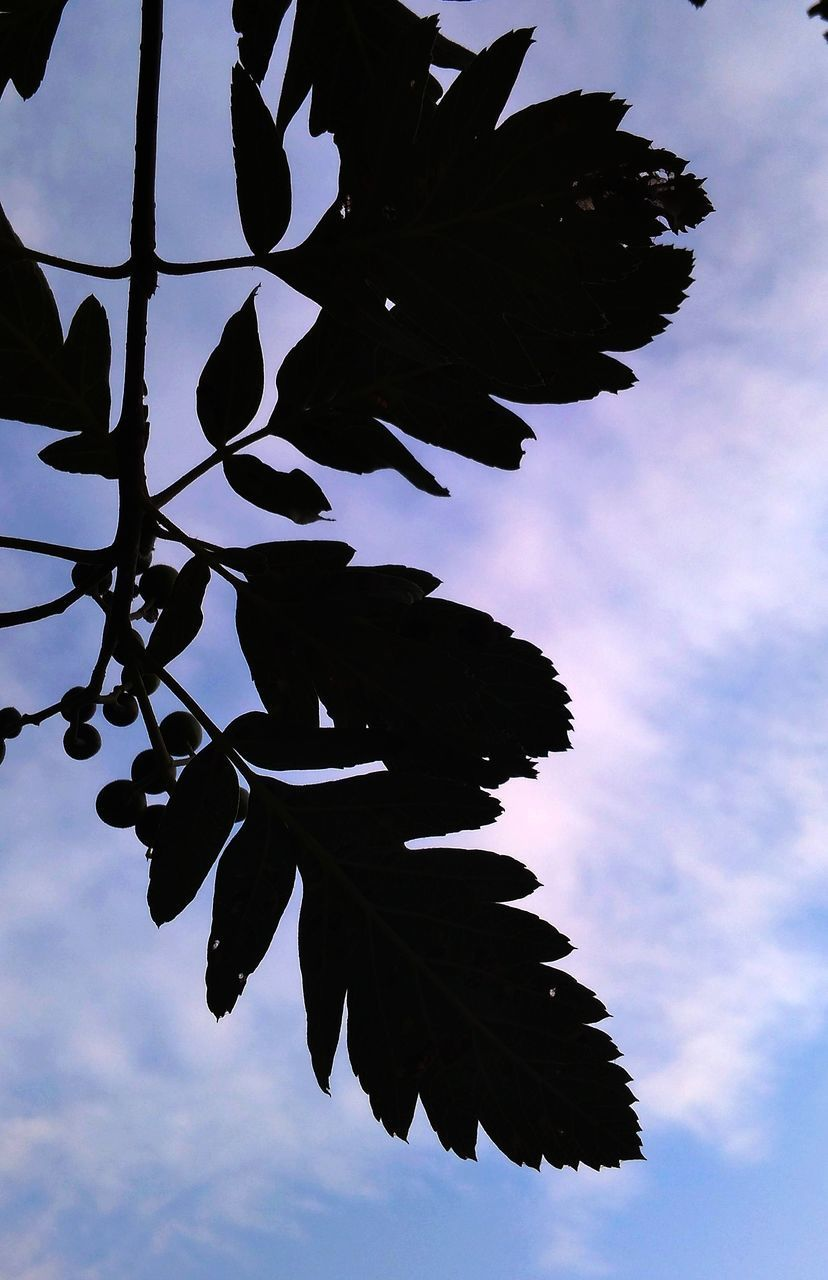 sky, cloud - sky, nature, silhouette, low angle view, plant, no people, leaf, tree, plant part, beauty in nature, growth, day, outdoors, tranquility, dusk, branch, close-up, blue, focus on foreground, leaves, directly below