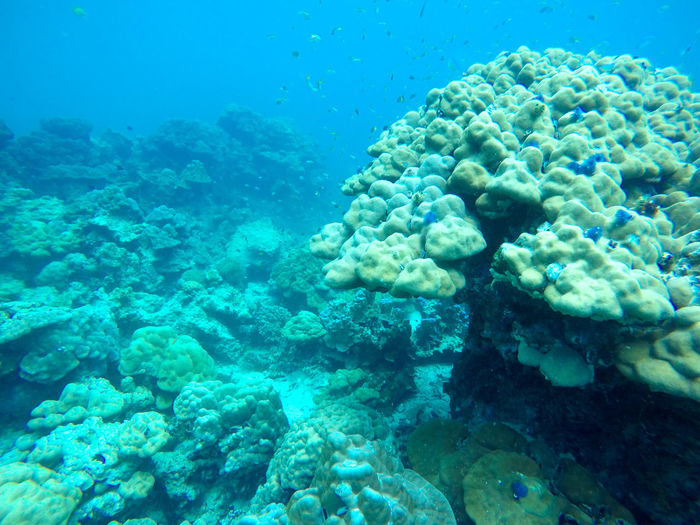 Underwater view of coral in sea