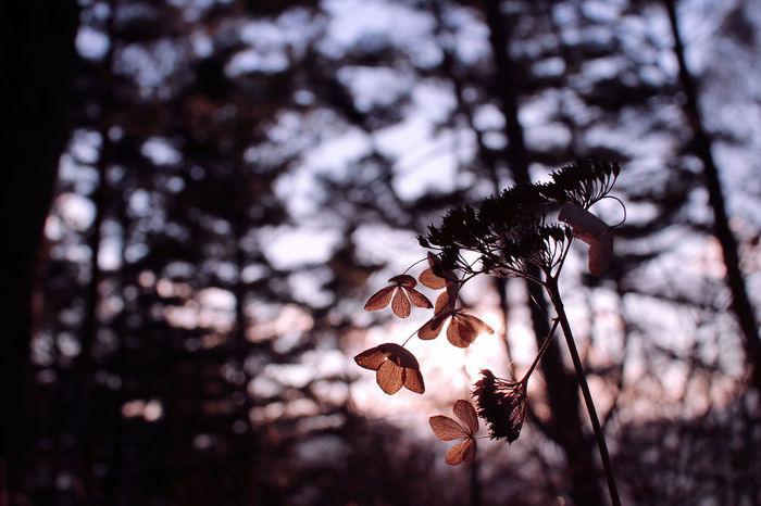 Nature Nature_collection EyeEm Nature Lover Beautiful Nature Plants In The Forest Flowers Sunset Light And Shadow Shadow