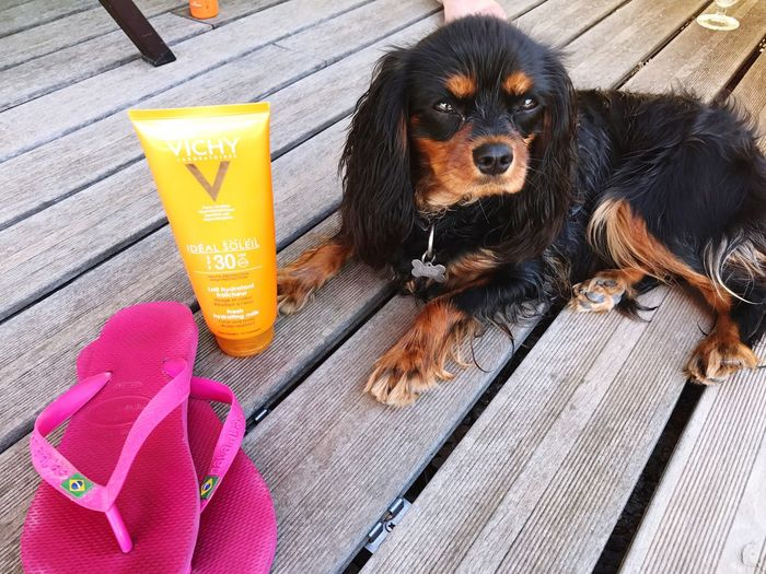 Dog Pets Outdoors Summer Sunscreen Flip Flops Summer ☀ Essentials Travel Vacation Beach Poolside Travel With Pet Dog Friendly Pool Sun Skincare Freshness South Of France Healthy Lifestyle