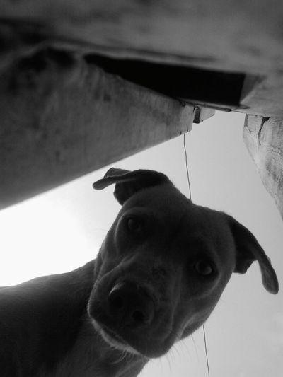 I Love My Dog Dog Lucy♡