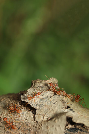 Close-up of ant on rock