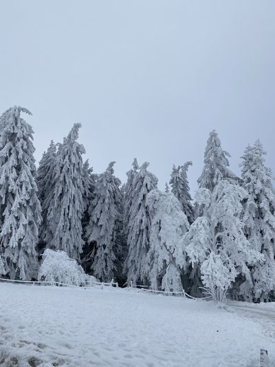 Scenic view of snow covered trees against clear sky