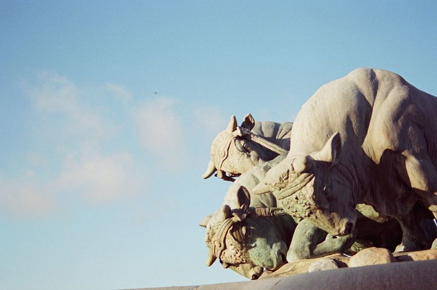 Canon Eos 3 Fujicolor Pro 400H Animal Themes Animals In The Wild Clear Sky Day Film Photography Low Angle View Mammal Nature No People Outdoors Sculpture Sky Statue
