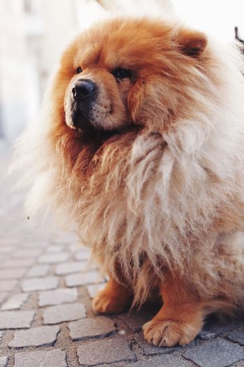 It's a doggy dog world Happy Authentic Moments Faith Love One Animal Animal Themes Animal Domestic Pets Domestic Animals Mammal Canine Dog Looking Away Looking Animal Body Part Close-up Cute Animal Hair Focus On Foreground No People Brown Day