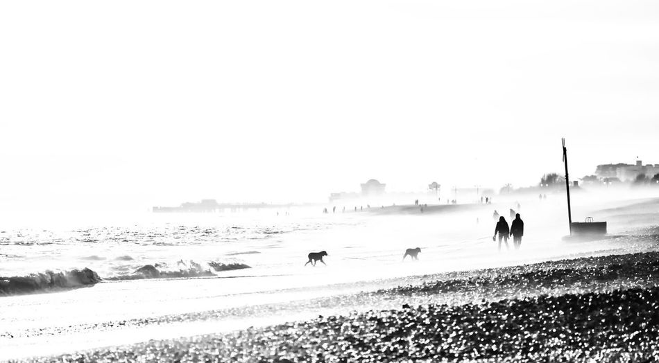 Misty evening on Southsea beach Southsea Pier Southparadepier Hampshire  England Beach Waves Dogs People Misty Mist Blackandwhite Black And White Water Sea Beach Sand Wave Winter Sky