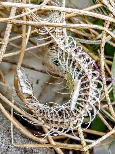 arabesque Nature Skeleton Close-up Spiral