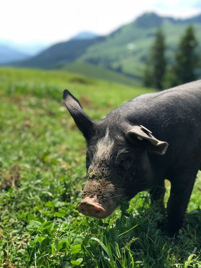 Animal Themes One Animal Animal Mammal Plant Vertebrate Field Mountain Land Day