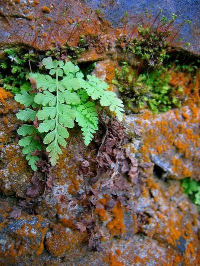 Fern, moss, rock, lychen. Fern Moss Lychen Rock Macro Nature