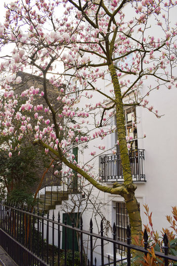 Romantic, spring shot in the streets of London Plant Flowering Plant Flower Architecture Built Structure Building Exterior Tree Freshness Building Springtime Blossom Fragility Growth Branch Nature Beauty In Nature Day City Sky No People Outdoors Cherry Blossom Cherry Tree Spring London Notting Hill Pink Color Girly Travel Europe Porch Lights Pretty Charming Romantic Entrance England United Kingdom Brexit Love