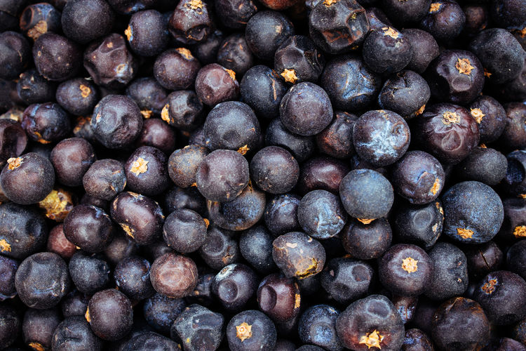 Juniper berries gin background Juniper Berries GIN Background Texture Blue Purple View Top Above Overhead Botanical Spice Dried Food Dark Dry Fruit Freshness Berry Fruit