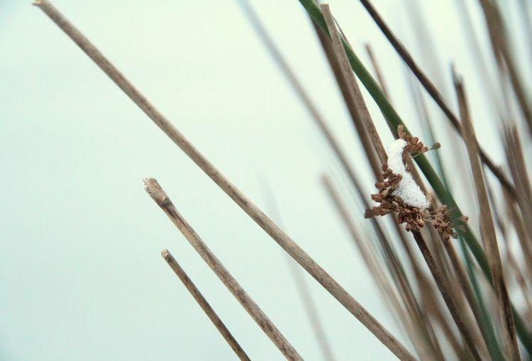 First Snow Nature_collection EyeEm Best Shots - Nature Ferns