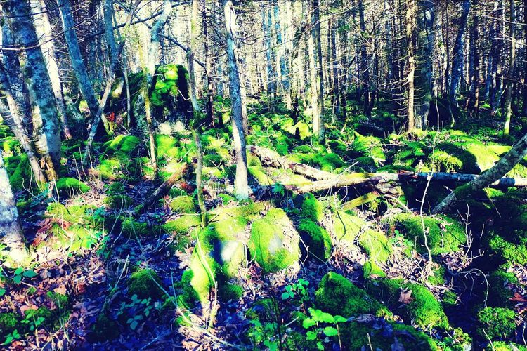 Nature Forest Light And Shadow Tree