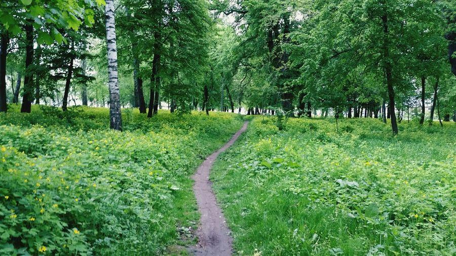 Green Color Nature Beauty In Nature No People Day Ukraine Ukraine, My Ukraine! Travel Destinations Travel Beauty In Nature Andrushivka Zhytomyr
