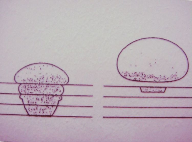 Muffins Architecture Sketch Drawing